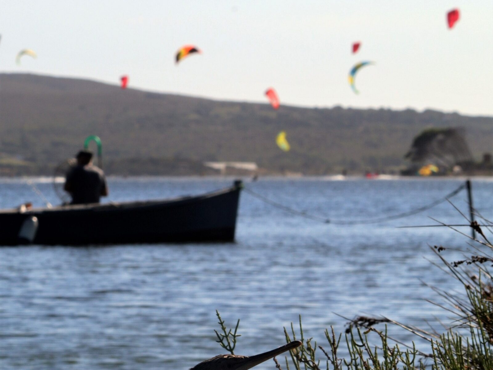 Cormorano nel kite spot di Punta Trettu in Sardegna